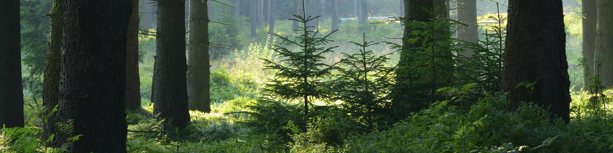 Creating and Inspiring Champions of Sustainable Forestry