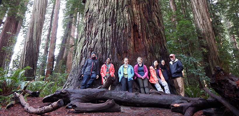 WFI_Fellows_in_Redwoods_w_RZ_820