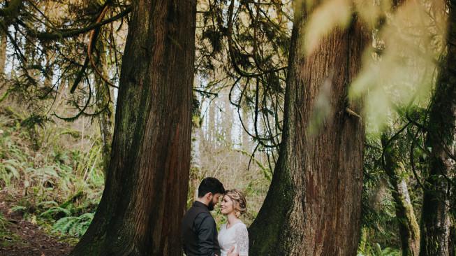 Large Cedar Trees