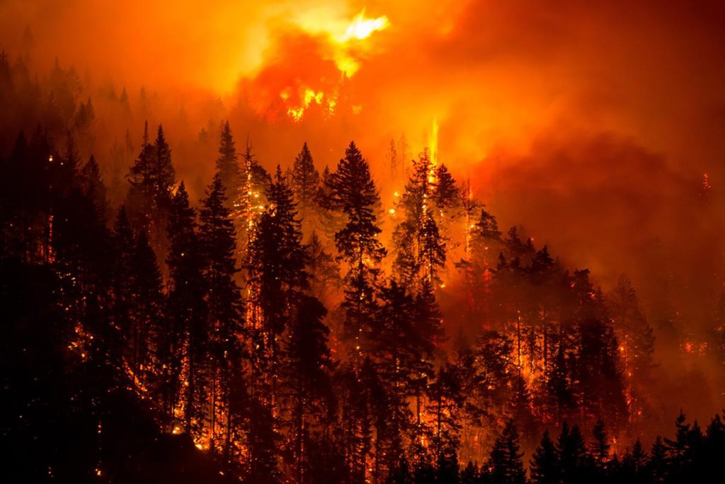 Raging wildfire image