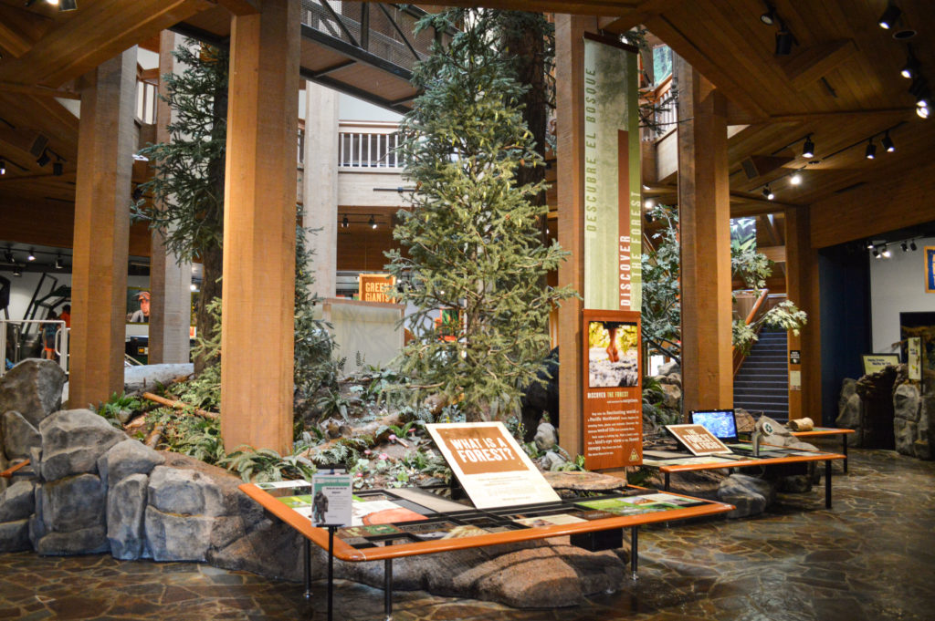 Forests of the Pacific Northwest exhibit with trees
