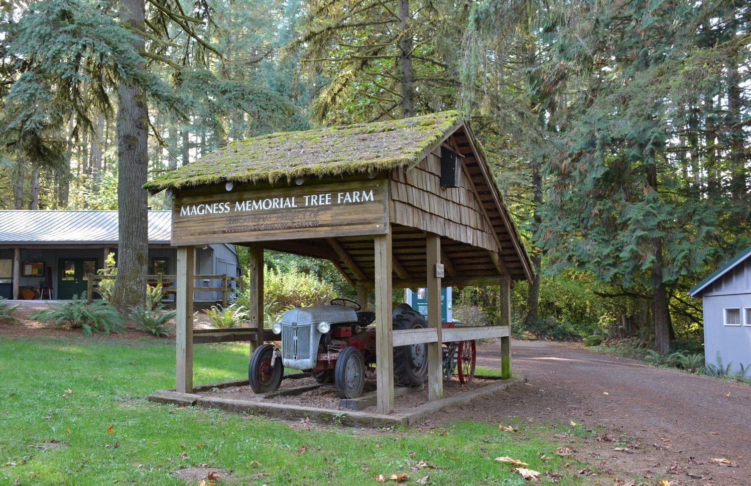 Vintage tractor under wooden shelter at Magness Memorial Tree Farm