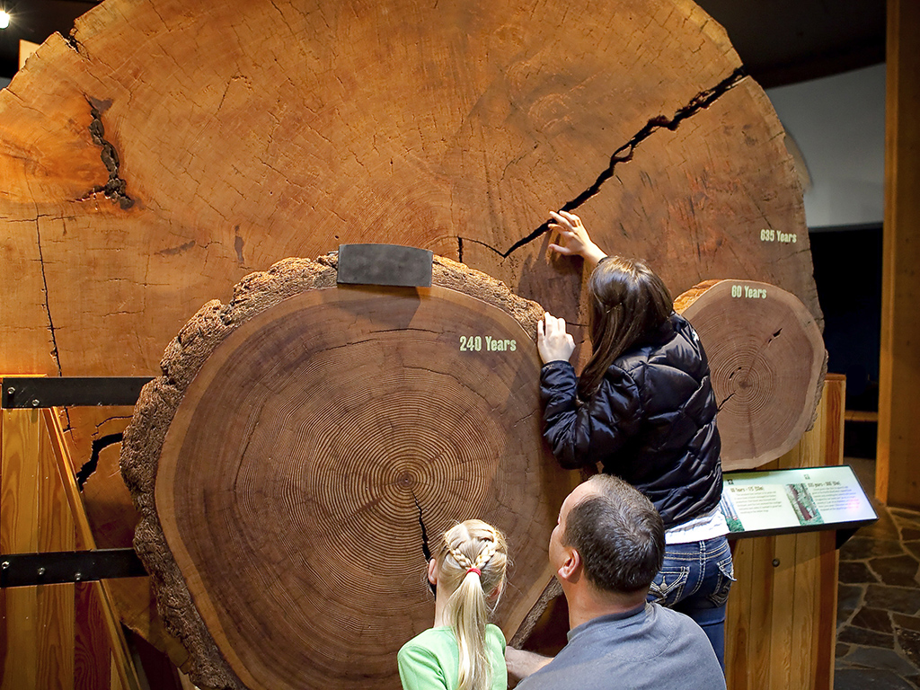 People examining wooden cross cut display