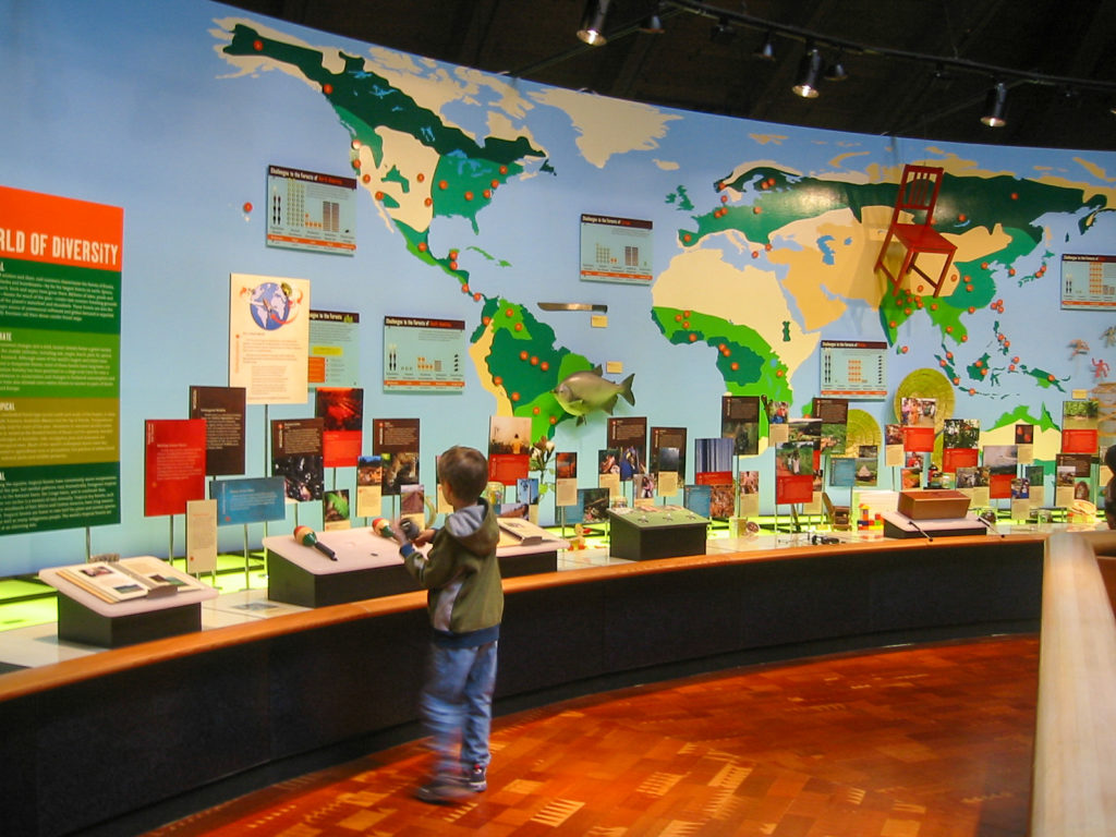 Young boy interacting with world map exhibit wall