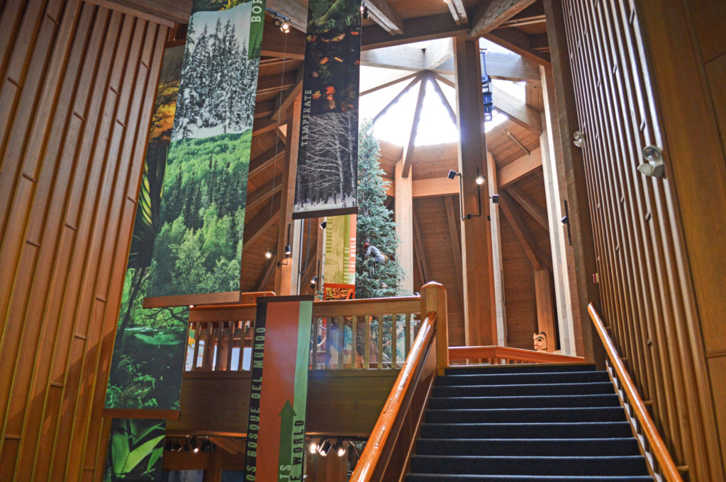 Stairway up to a wooden paneled room and atrium windows