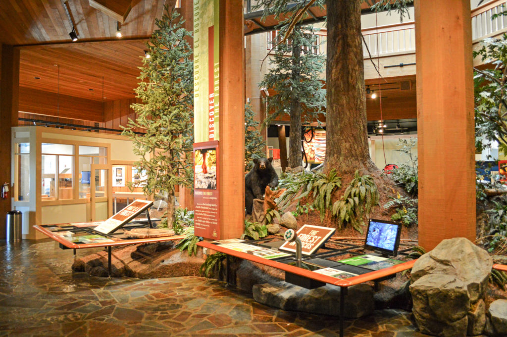 Forests of the Northwest museum exhibit with trees and black bear