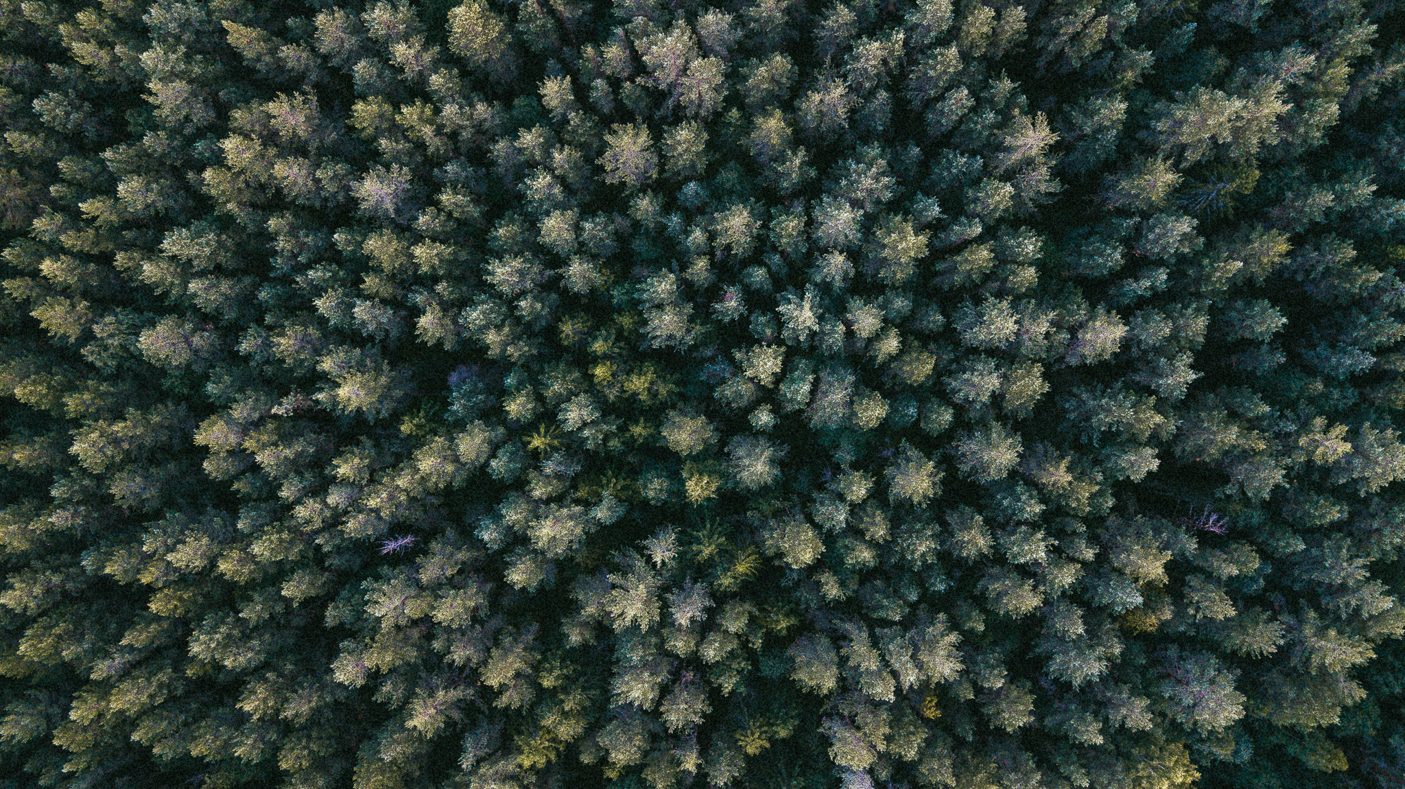 Aerial shot of forest and trees