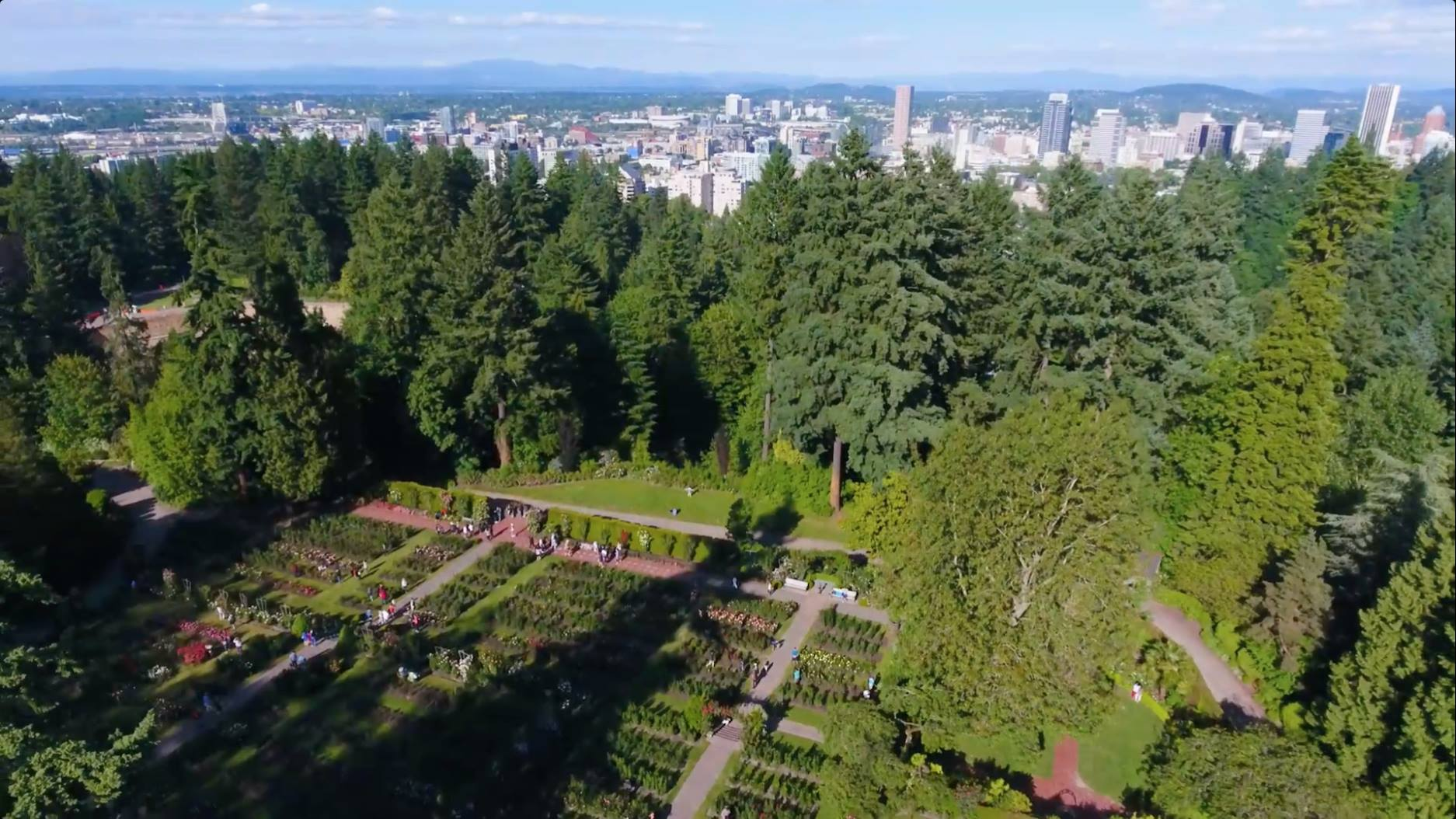 Aerial shot of forest and cityscape