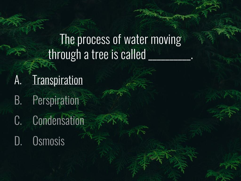 World Forestry Center_Forest Quiz_Slide10