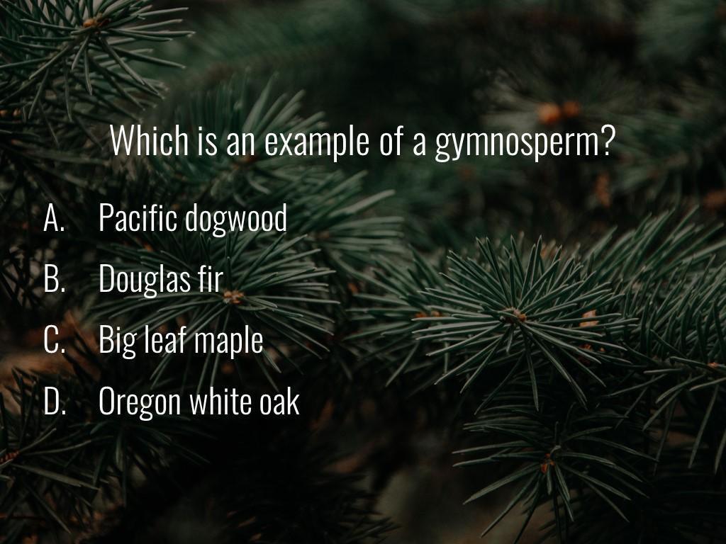 World Forestry Center_Forest Quiz_Slide15