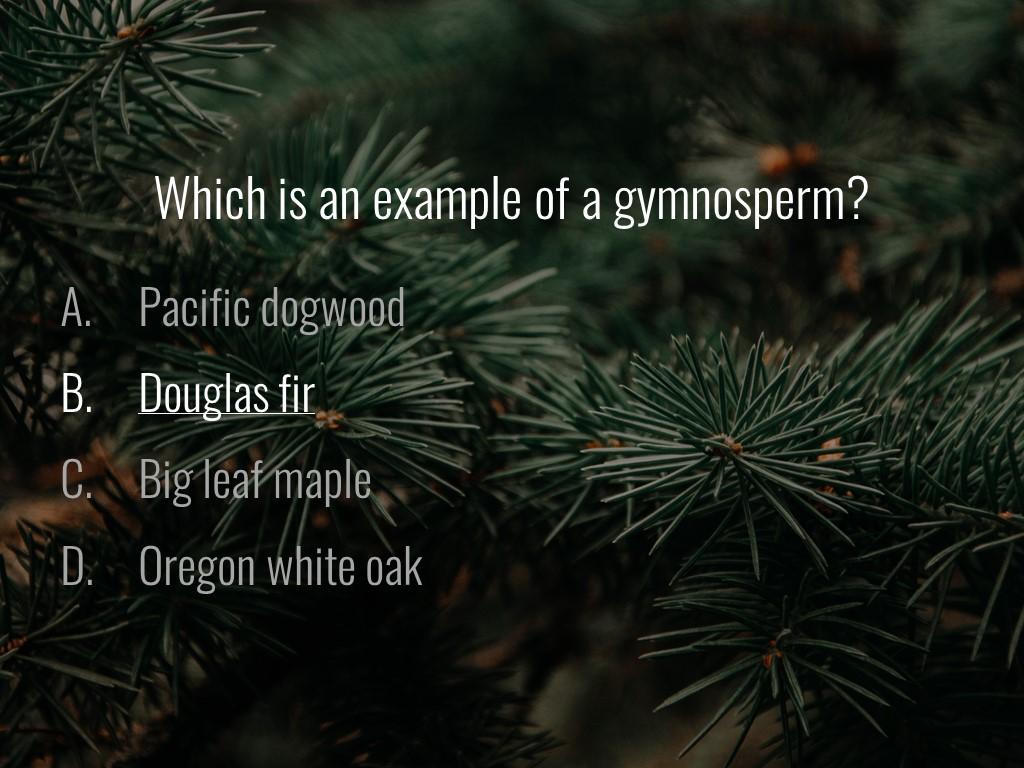 World Forestry Center_Forest Quiz_Slide16