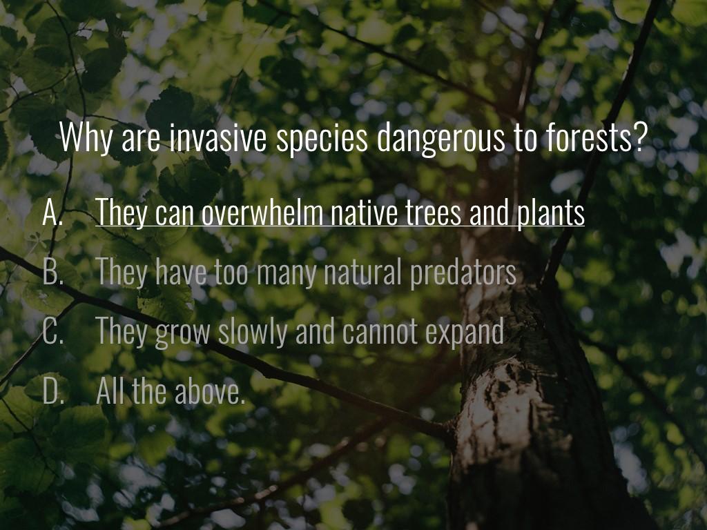 World Forestry Center_Forest Quiz_Slide32