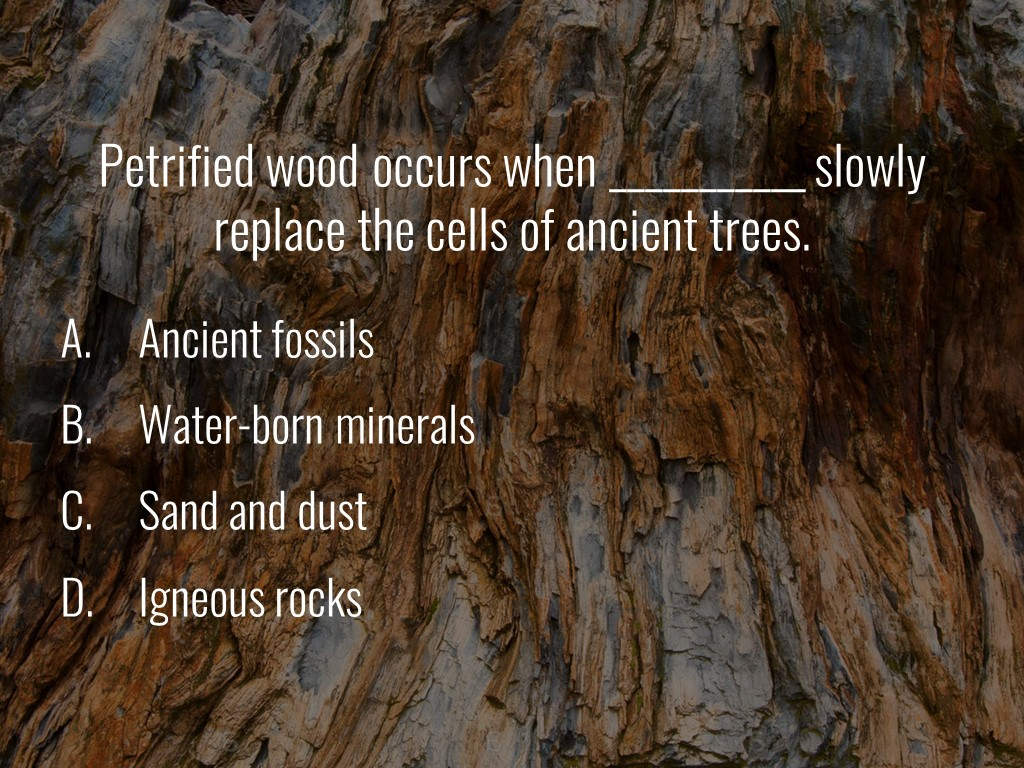 World Forestry Center_Forest Quiz_Slide7