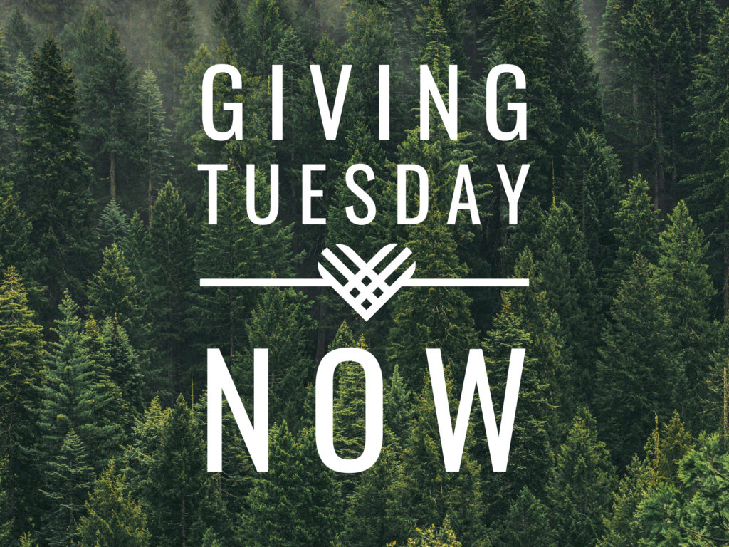 """Giving Tuesday Now"" text overlaid on a dense green forest arial photo"